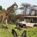 Game Drives at Moremi Game Reserve